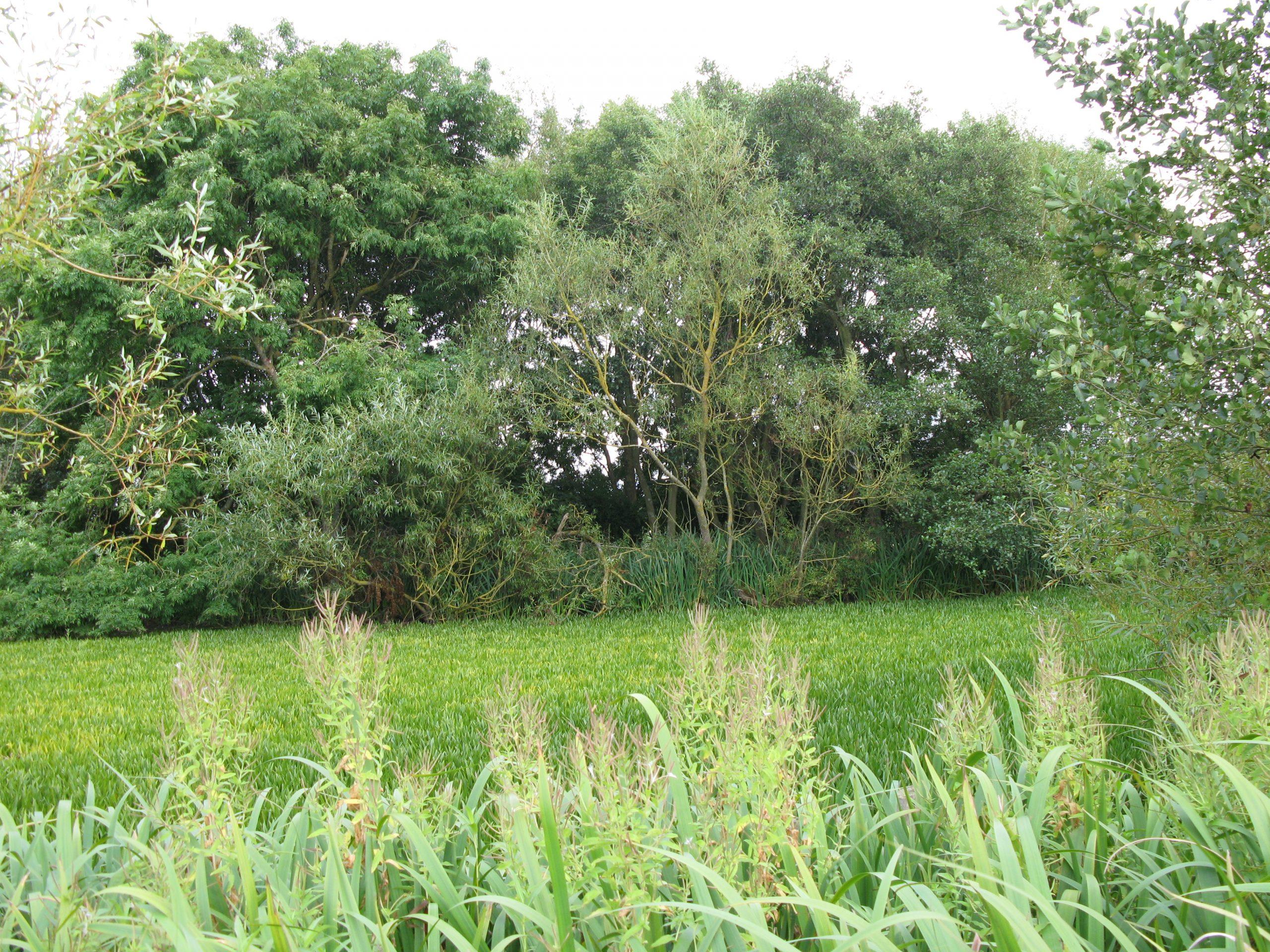 Ogle Pond area