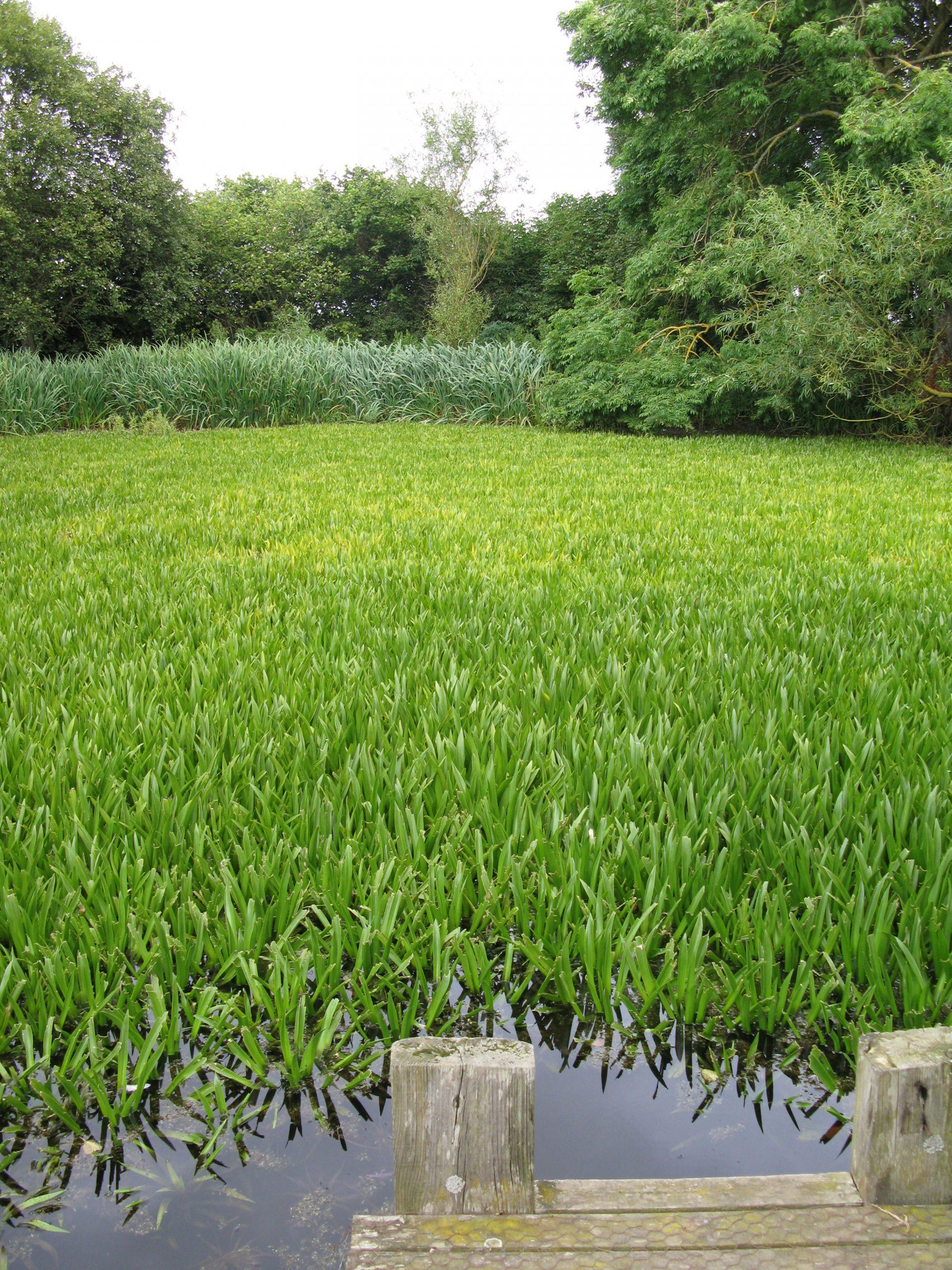 Ogle Pond 02